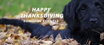 sonshine kennels happy thanksgiving kindersley social
