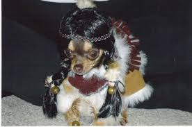 Funny Animal Halloween Costumes Funny Image Collection Funny Dog Halloween Costumes Pictures