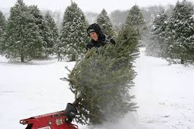 cutting your own christmas tree in u0027burbs u0027all about creating