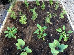edible gardens point loma get the most from vegetable garden mulches