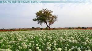 abscisic acid in plants definition u0026 function video u0026 lesson