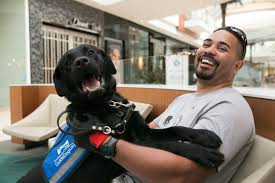 Leader Dogs For The Blind Jobs Southeastern Guide Dogs