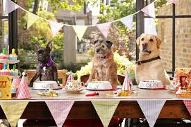 dog birthday party 5 ways to make your pooch s birthday party