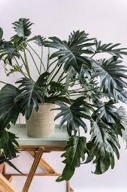 philodendron xanadu garden pinterest plants gardens and