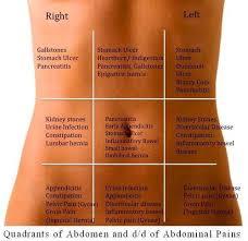 Right Side Human Anatomy Wall Chart Of Human Anatomy Www Oustormcrowd Com