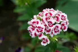 native plants of virginia gardens u0026 landscapes george washington u0027s mount vernon