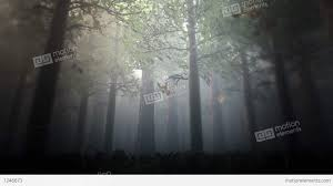 deep forest fairy tale scene 3d render stock animation 1246673