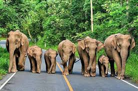 family of elephants amazing photo of the day dottech