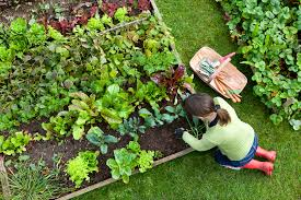how to grow fruits vegetables and herbs vegetable gardening