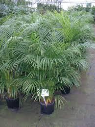 house plant types types of ornamental grasses hgtv 25 easy