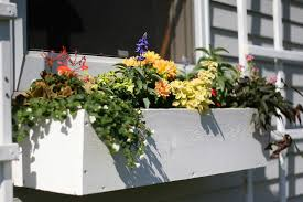 file 2007 flower box 514957000 f4cf3667da b jpg wikimedia commons