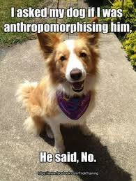 Border Collie Meme - 20 best life with dog images on pinterest border collies