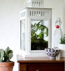 7 delightful mini indoor garden ideas to liven up your living