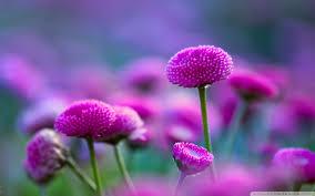 Love Flowers Flower Nature Purple Beautiful Pink Love Flowers Life Wallpaper Hd