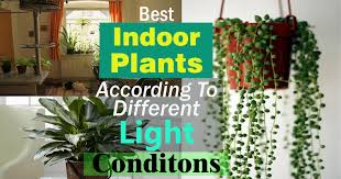best light for plants best indoor plants according to different light conditions