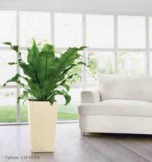 plante verte bureau asplenium plante bureau décoration