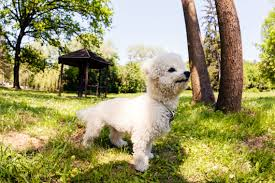 state with most dog owners 2016 the 10 richest pets of all time money