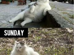Drunk Cat Meme - drunk cat weknowmemes
