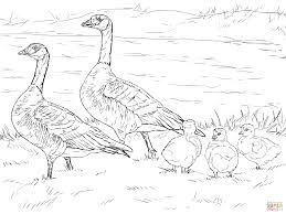 cackling goose family coloring page free printable coloring pages