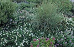 Small Shrubs For Front Yard - 15 low maintenance shrubs for landscaping this old house