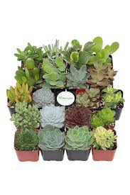 Low Light Succulents by 10 Plants You Can Buy On Amazon Shop For Houseplants And