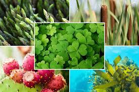 australian native edible plants eat your greens 15 best edible wild plants hiconsumption