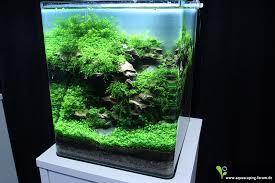 nano aquascape nano aquascaping fresh water aquariums pinterest aquariums