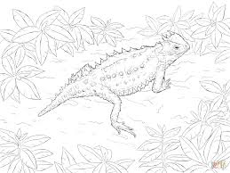 desert horned lizard coloring page free printable coloring pages