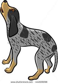 bluetick coonhound treeing blue tick hound stock images royalty free images u0026 vectors