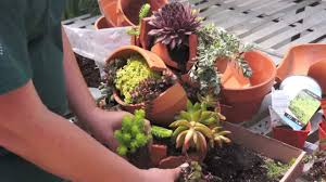 pots for succulents for sale broken pot project youtube