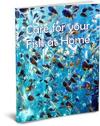Home Aquarium Care For Fish At Home Setup An Aquarium Care For Fish At Home