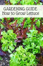 Beginners How To Grow Just by 8 Organic Vegetables You Can Grow U2013 Fast Organic Vegetables