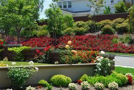 12 ways to landscape using flower carpet roses your easy garden