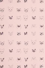 wallpaper cat whatsapp 50 meow high resolution wallpaper s collection