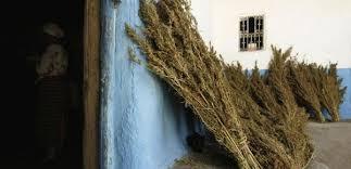 chambre de sechage cannabis 12 villes qu un vrai fumeur de cannabis se doit de visiter