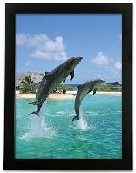 amazon com 3d dolphin print ocean and tropical scene 3