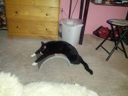 Cat Scratchers Cardboard So I Bought My Cat A Scratching Post Cats