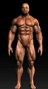 Human Anatomy Muscle Human Anatomy Muscular Male On Behance