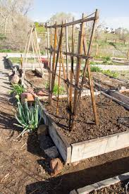 our first garden twosmallcones