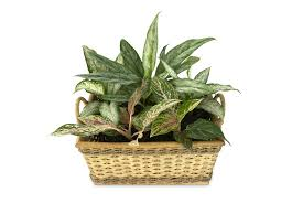 common house plants that are actually poisonous healthy happy