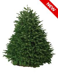 noble christmas tree 6 7 ft noble fir christmas tree hawaii trees wreaths more
