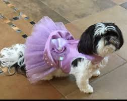 Dog Wedding Dress Wedding Dog Harness Etsy