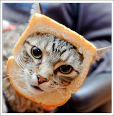 Cat Breading Meme - jaunty memes image memes at relatably com