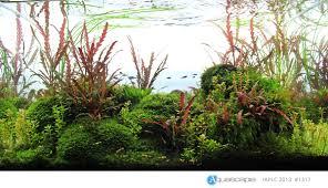 ᐅ aquascaping naturaquarium und aquariengestaltung