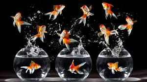 types of aquarium different types of colorful aquarium fish youtube