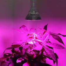Flower Light Bulbs - full spectrum light bulbs lighting designs ideas