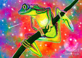 rainbow tree frog digital by nick gustafson