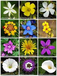 flower encyclopedia flower simple the free encyclopedia
