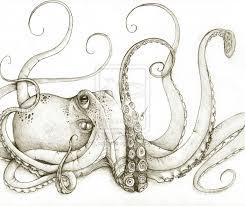 realistic octopus sketch