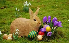 easter bunny here are all the local easter egg hunts and events in and around